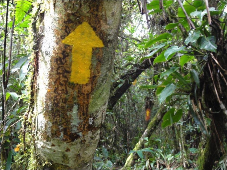 Sinalização intensiva em trecho de mata fechada: de uma seta é possível ver a seguinte (APA Estadual de Guaraqueçaba/ Paraná).