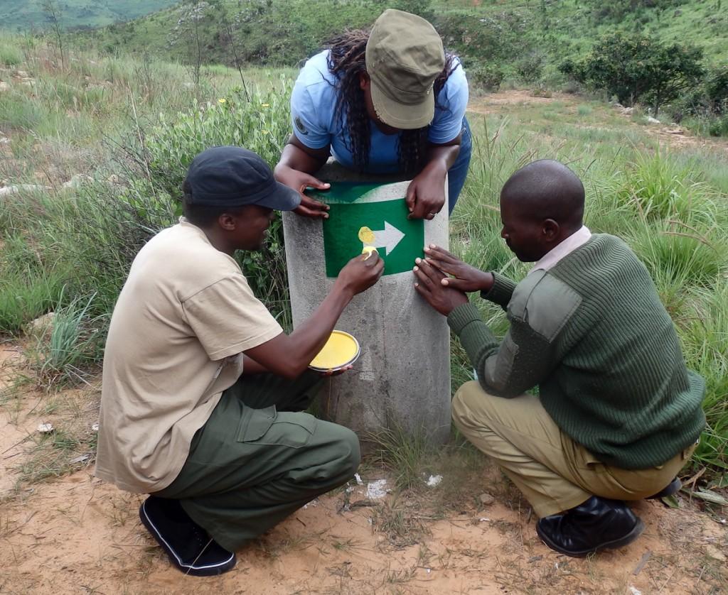 Uma pessoa segura o molde de plástico, outra aplica a tinta com a bucha. Uma terceira pessoa a cerca de 20 metros orienta o local de aplicação da sinalização. (Parque Nacional Nyanga-Zi