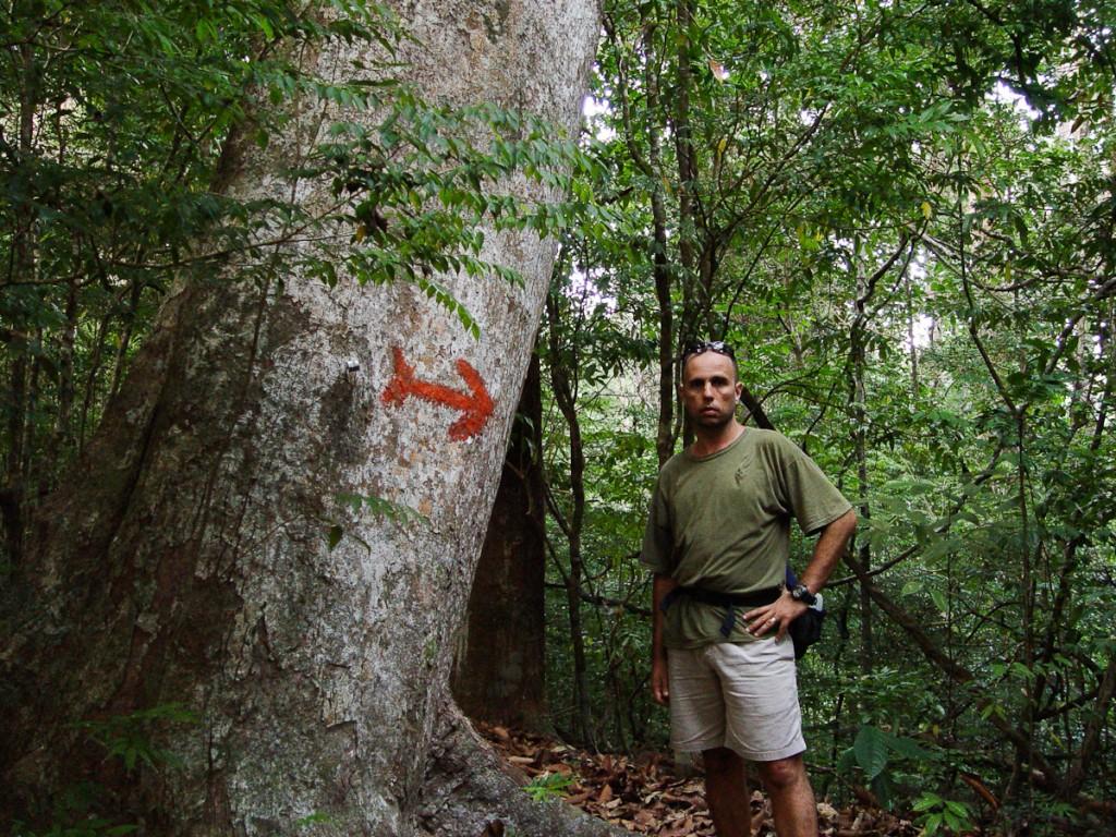 Sinalização com seta direcional, pintada na posição horizontal (Parque Nacional Kinbalu, Malásia)