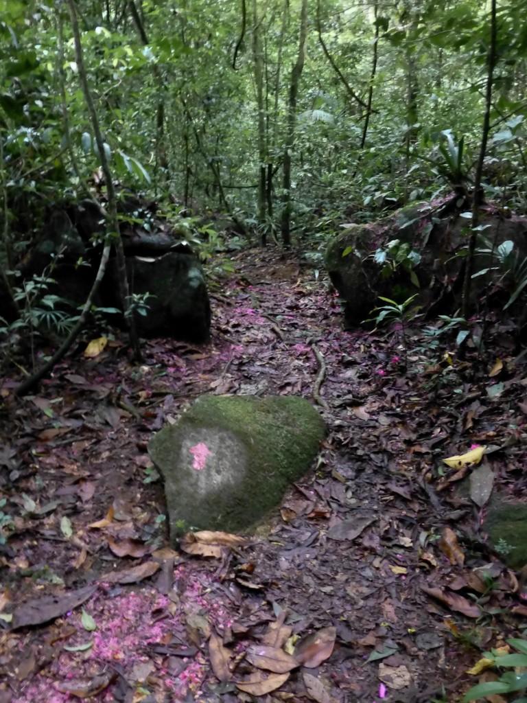Sinalização direcional pintada na posição vertical (Parque Nacional da Serra dos Órgãos)