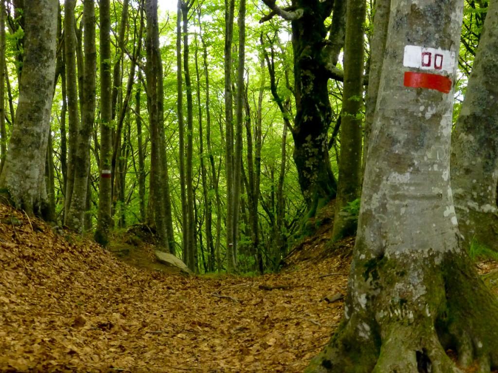 Trilha numerada no Parque Nacional Foreste e Casentinese