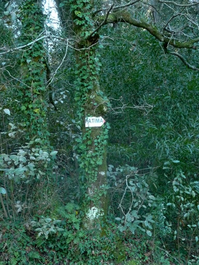 Tabuleta afixada de forma errada. Os pregos foram batidos até o fim. Em breve, a árvore vai ter problemas para crescer (Mata Nacional do Bucaco, Portugal)