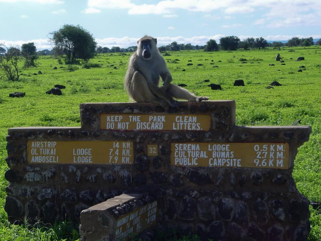Quem tem elefantes, que gostam de se coçar nas placas,capricha nas fundações de sua sinalização! (Parque Nacional Amboseli, Quênia)