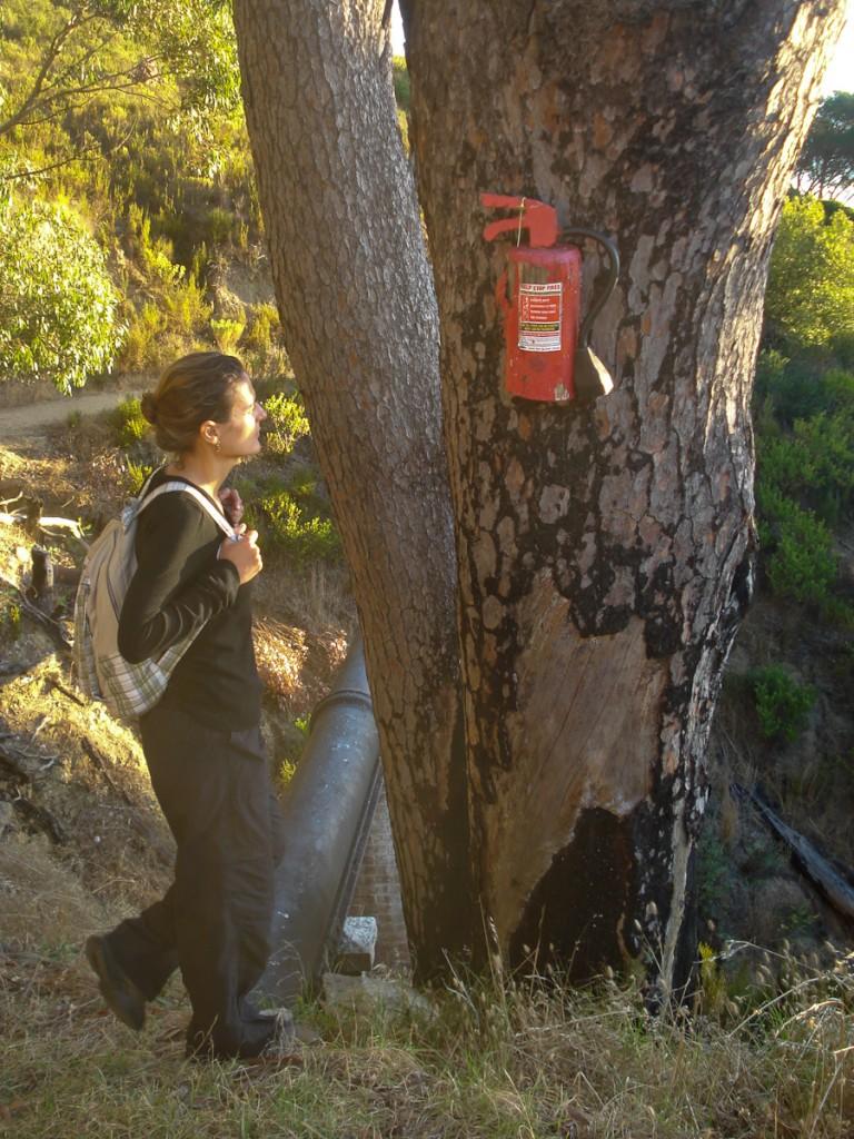 Sinalização criativa contra incêndios florestais. Um extintor escupido em madeira no Parque Nacional da Montanha da Mesa, na África do Sul.
