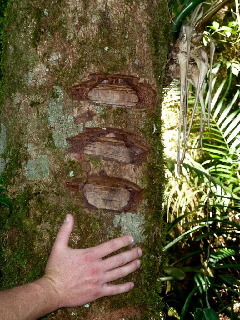 Sinalização feita a facão no Parque Nacional da Serra dos Órgãos, antes daquela UC adotar os princípios defendidos neste manual.