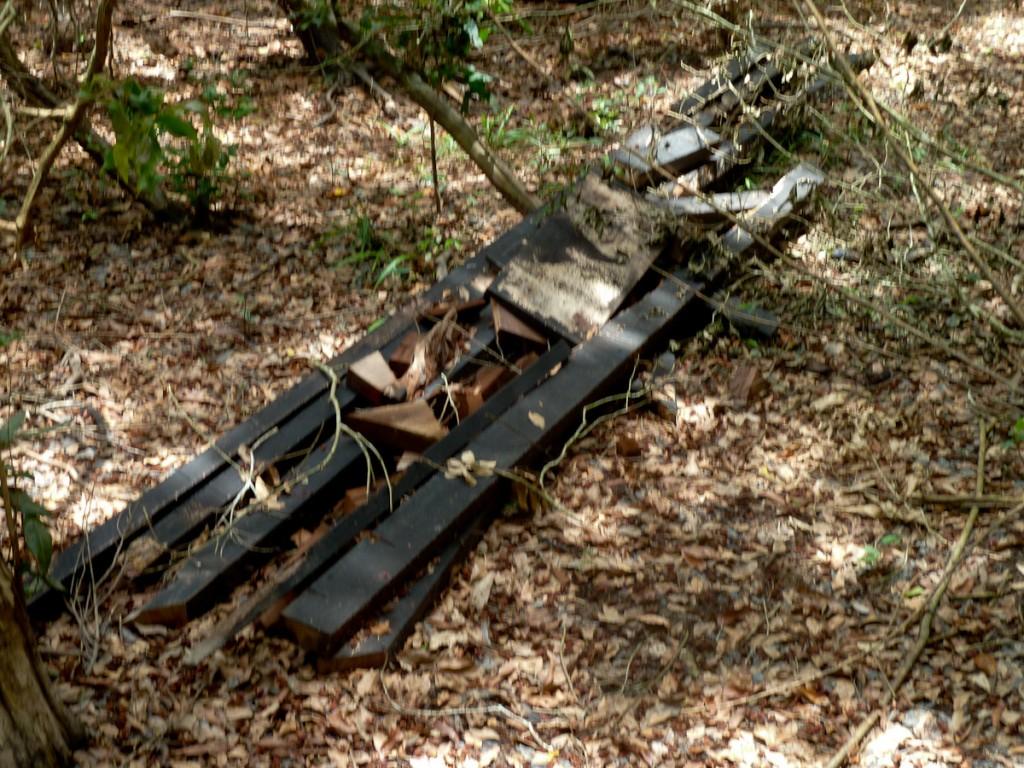 Restos de madeira deixados na trilha após trabalhos de manutenção. Leve-os de volta! (RPPN SESC Pantanal)
