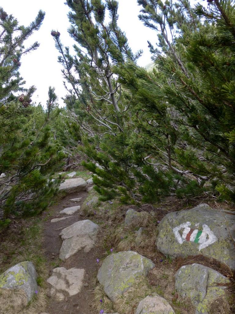 O logotipo retangular tradicional europeu não foi suficiente para mostrar o caminho e virou seta (Parque Nacional Pirin, Bulgária)