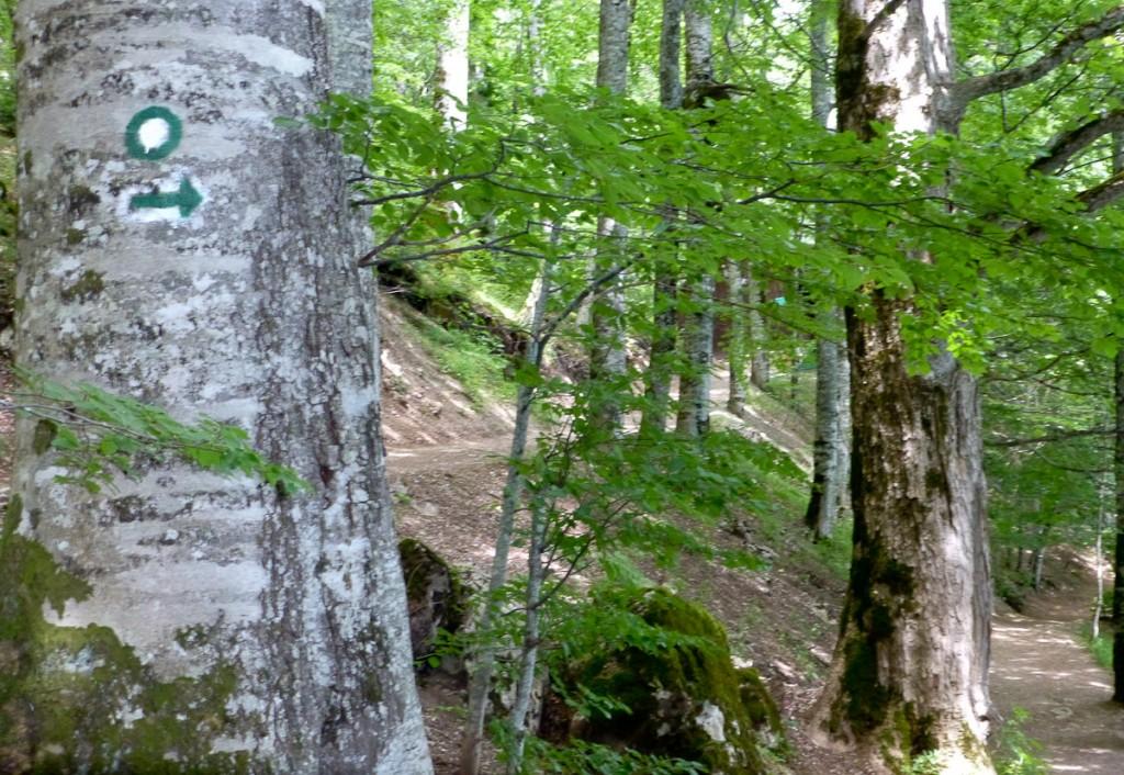 O logotipo circular não foi suficiente. Foi necessário adicionar uma seta (Parque Nacional Biogradska Gora, Montenegro)