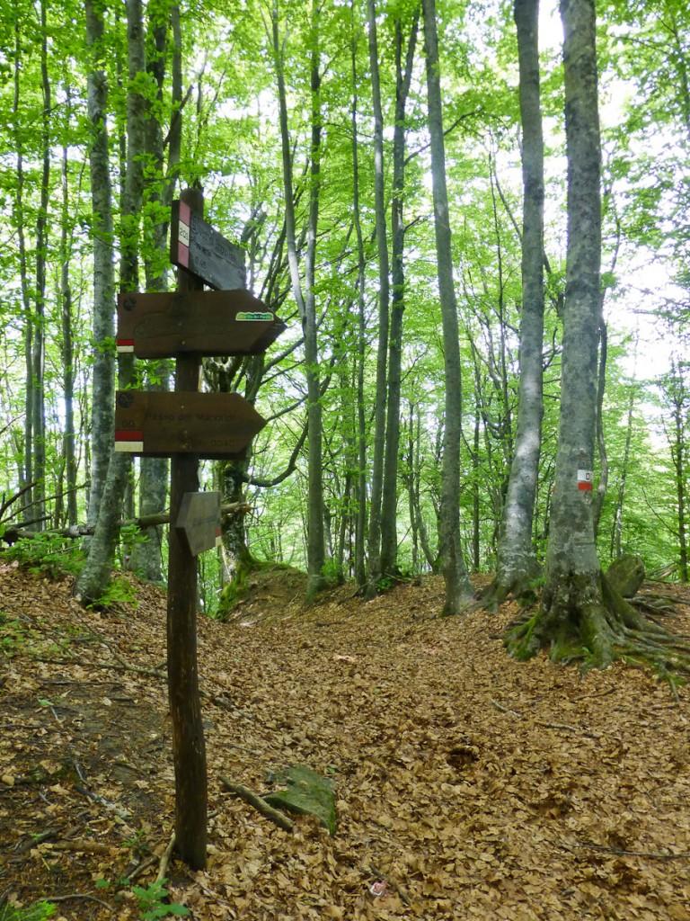 Sinalização direcional de madeira e sinalização confirmatória pintada na árvore (Parque Nacional Foreste e Casentinese, Itália).