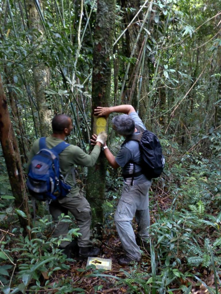 Sinalização da Trilha Transcarioca sendo pintada no Parque Nacional da Tijuca