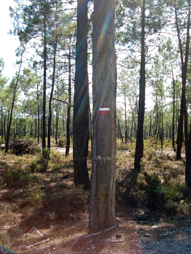 Sinalização em árvore (Trilha de Longo Curso E9, no Parque Natural da Arrabida, em Portugal)