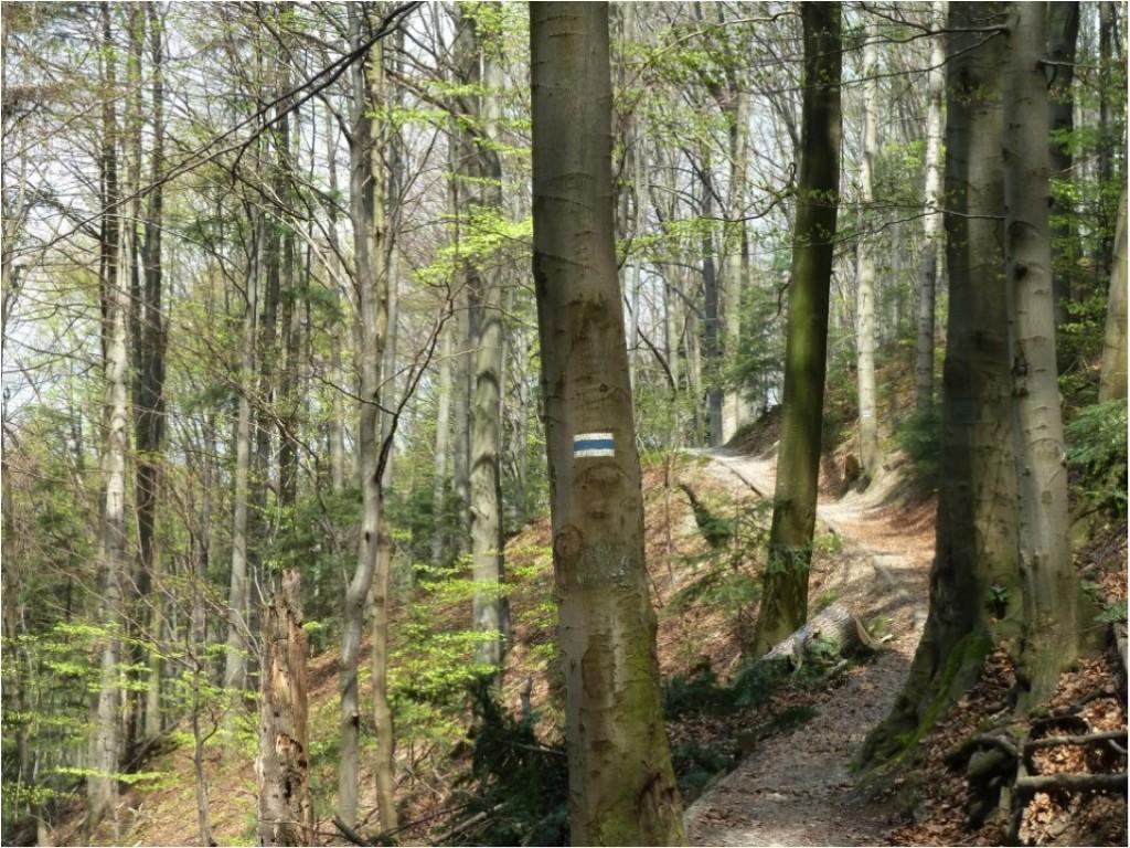 Notar que a trilha está bem definida e limpa e que não há bifurcações. Mesmo assim foi pintada uma sinalização calmante (trilha ao Pico das Três Coroas, Parque Nacional Pieninsky, Polônia).