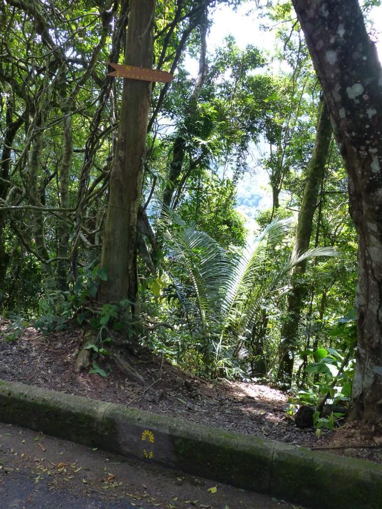 Início do trecho Vista Chinesa-Solar da Imperatriz, da Trilha Transcarioca, no Parque Nacional da Tijuca. Notar que, além da tabuleta, o caminho também foi sinalizado com a logomarca da Trilha Transcarioca, pintada no espelho do meio-fio da estrada.