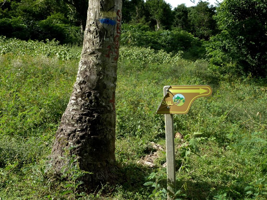Tabuleta e sinalização pintada na Waitukubuli National Trail (Parque Nacional Cabrits, Dominica). Notar que a tabuleta já está quebrada e que, em breve, a única sinalização que restará será a que está pintada na árvore.
